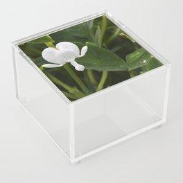 White (not bleeding) Heart Acrylic Box