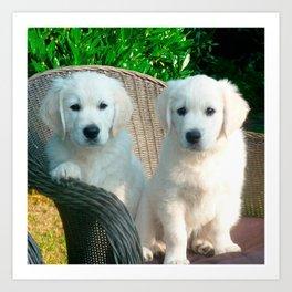 White Golden Retriever Dogs Sitting in Fiber Chair Art Print