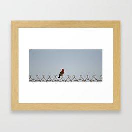 Red Bird on a Wire Framed Art Print