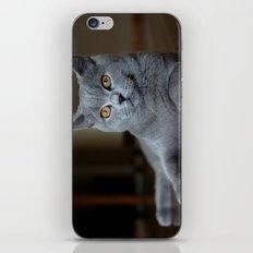 Diesel the cat 1 iPhone & iPod Skin