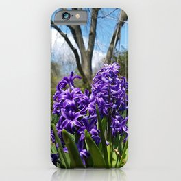 Hyacinth Flowers - The Essence of Spring iPhone Case