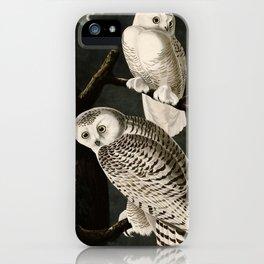 Snowy Owl Vintage Bird Illustration - Audubon iPhone Case