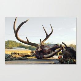 buck kill Canvas Print