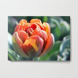 Orange Princess Tulip Metal Print