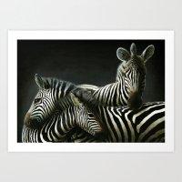 3 Zebras Art Print