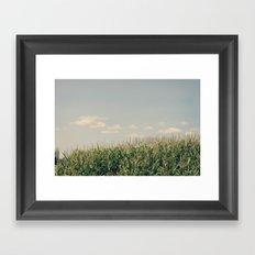 Campos de maíz Framed Art Print