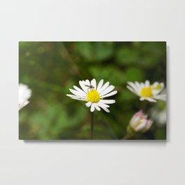 Flower Fly Metal Print