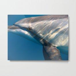 Dolphin's Gaze Metal Print