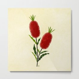 Australian Bottlebrush Red Flowers Metal Print