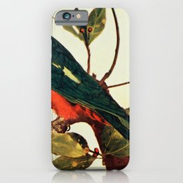 Vintage Print - Birds and Nature (1897) - King Parrot iPhone Case