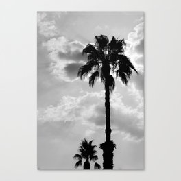 Palm Trees In Black And White Canvas Print