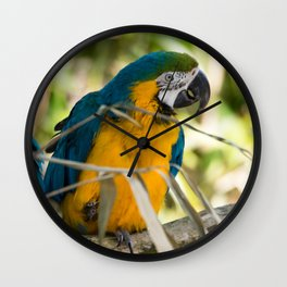 Parrots couple in the tree tops Wall Clock