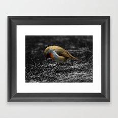 Sad Robin Framed Art Print