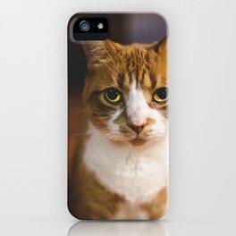 The Cat. iPhone Case