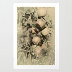 Fresh apples on the tree in vintage look Art Print