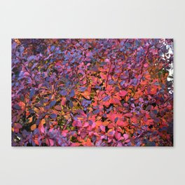 Colorful Fall Leaves Canvas Print