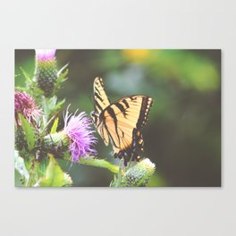Eastern Tiger Swallowtail Butterfly on Thistle Photography Canvas Print