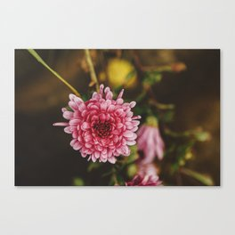 Madeira Collection VII Canvas Print