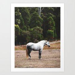 Dapple Grey Portrait Art Print