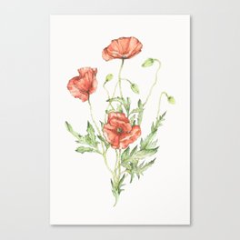 Fragile Beauty - Watercolor Poppies Canvas Print