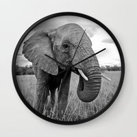 south africa Wall Clocks featuring African Elephant, South Africa by Shannon Wild