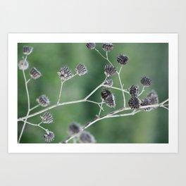 Gone to seed Art Print
