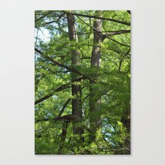 tangled twins Canvas Print