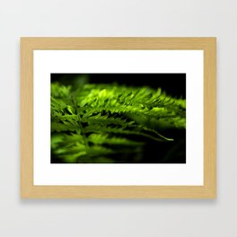 Fern #2 Framed Art Print