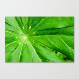 Peaceful Greenery Podophyllum Leaf Botanical / Nature Photograph Canvas Print