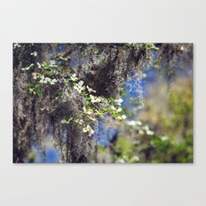 Mossy Dogwoods Canvas Print