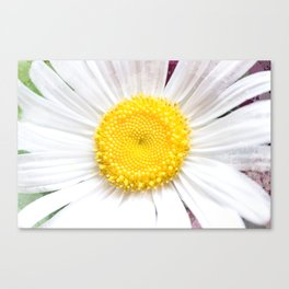 Daisy Flower Close-Up #1 #art #society6 Canvas Print