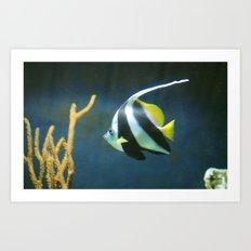 Banner  Fish Art Print