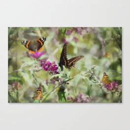 Butterfly Echoes Canvas Print