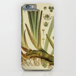 Vintage Print - Birds and Nature (1902) - Sweet Flag iPhone Case