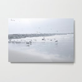 Flock of gulls Metal Print
