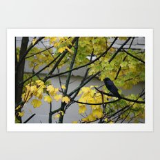 Raven Photography, a yellow coloured tree in Seattle caught my eye Art Print