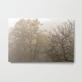 Autumnal naked trees surrounded by fog Metal Print