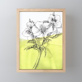 Hellebore watercolor pen illustration Framed Mini Art Print