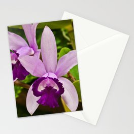 Cattleya Orchid Stationery Cards