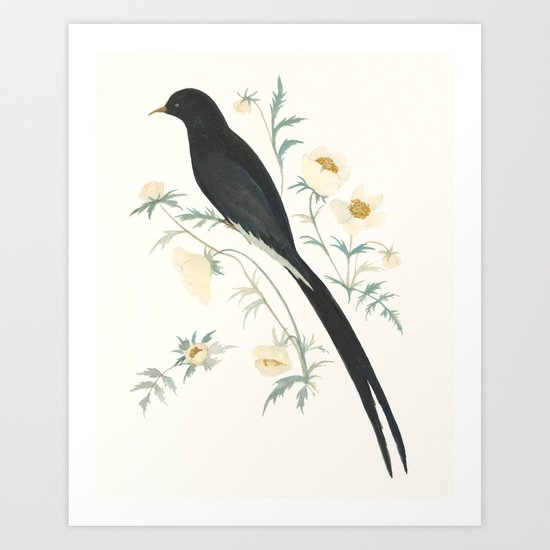 Black Winged Bird of Paradise by emilywinfieldmartinart