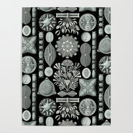 Ernst Haeckel - Scientific Illustration - Diatomea Poster