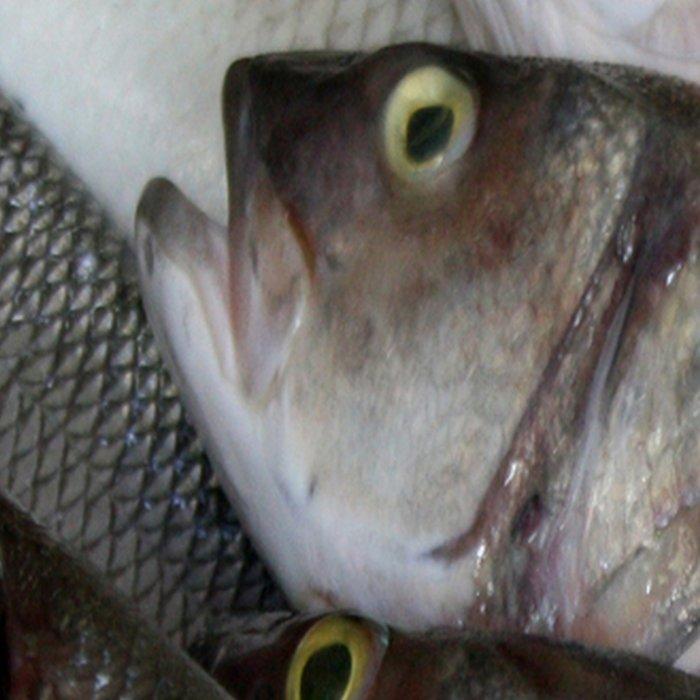 Freshwater Perch for Sale Leggings