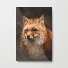 American Red Fox Metal Print