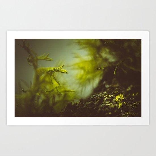 Lichen (moss) in a fog Art Print