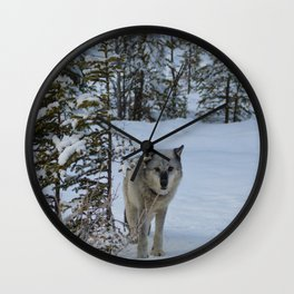 Lone wolf in the snow Wall Clock