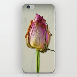 Old Rose on Paper iPhone Skin