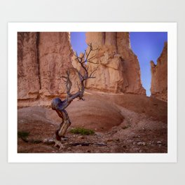 Tree in Bryce Canyon Art Print