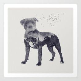 American Staffordshire Terrier - Amstaff Art Print