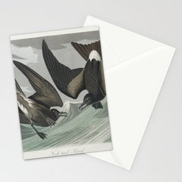 Fork-tailed Petrel from Birds of America (1827) by John James Audubon etched by William Home Lizars Stationery Cards