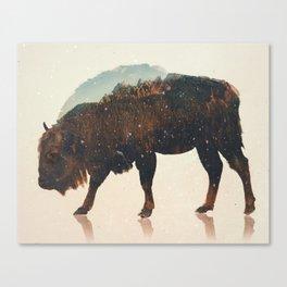 Veluwe: European Buffalo Canvas Print